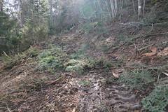 Sentier du Milieu @ Mont Veyrier @ Annecy-le-Vieux