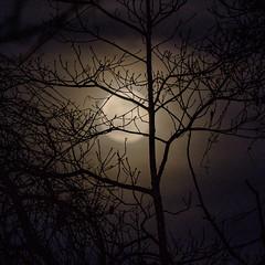 Foggy Moon_2973