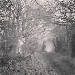 Photo of Flitwick fog