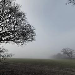 Photo of Winter oaks