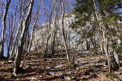 Forêt @ Mont Baron