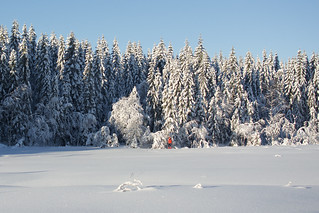 Red Skier