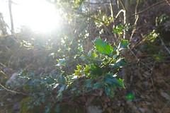Forêt @ Mont Veyrier