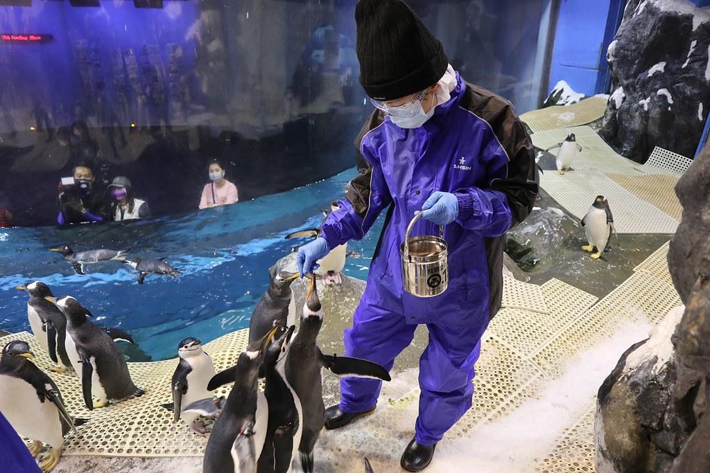 企鵝飼育照護體驗將化身企鵝飼育員,親手拿起餌料餵食企鵝 (1)