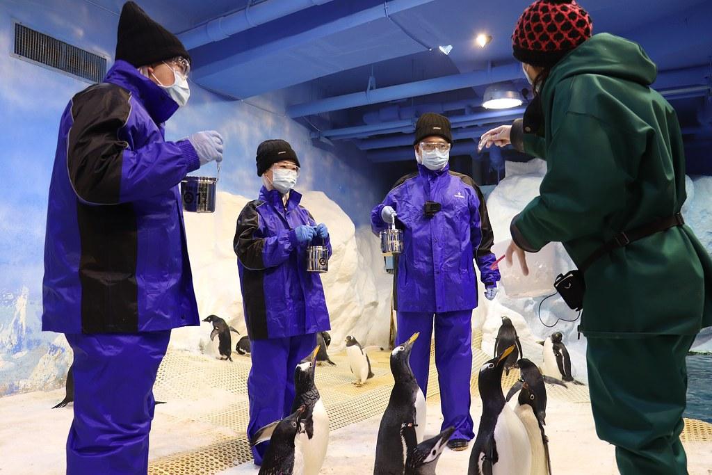 企鵝飼育照護體驗活動全程會由專屬解說人員及企鵝飼育人員陪同引導進行體驗活動