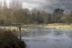 Photo of Floods_9495