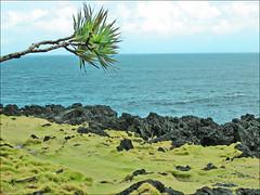 Le Cap Méchant (Île de la Réunion)