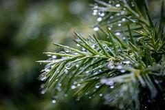 Photo of Rain drops on leaves