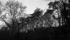 Photo of Trees, Ridge north of Lochwinnoch, Renfrewshire, Scotland, UK
