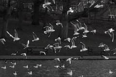 Photo of Abington Park