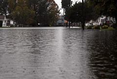 Flash Flood Hampton