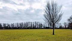 Photo of Trees at Haslam Park, Preston
