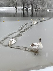 Photo of Breaking the ice.