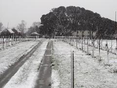 Photo of Crows Farm, Burgh Castle, Norfolk