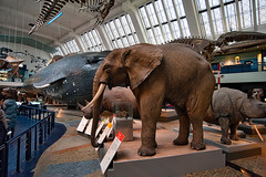 Photo of Large Mammals
