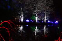 Photo of Wisley Glow - Dec 2020