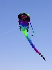 Photo of Show Kite