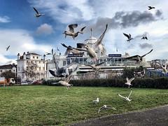 Photo of IMG_0852 - Mayflower Park - Southampton - 21.01.21