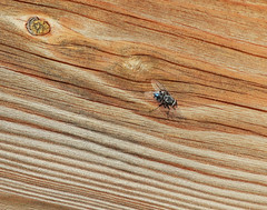 Photo of Fly on cabin:  18.1.21.