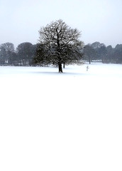 Photo of Snowing in Warley Woods. 13