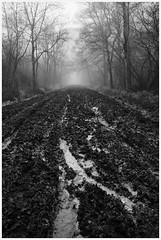 Photo of 21-01-09_Bucknall Woods_773