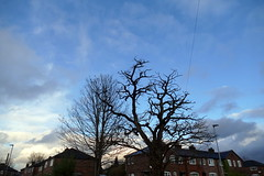 Photo of 23.1.21 Walk to Fog Lane Park 044