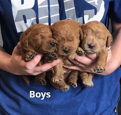 Ginger Boys pic 2 1-23