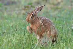 Photo of Mr Hare