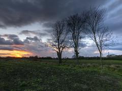 Photo of Three Tree Sunset