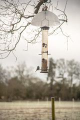 Photo of Long feeder