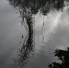 Reflections 10 January 2021
