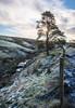 Tree and  stream, Howwood, Johnstone, Renfrewshire, Scotland, UK