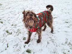 Photo of Whispa enjoying the snow in Willen, Milton Keynes 24Jan21
