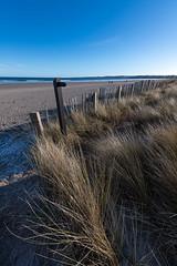 Photo of Dune Edge