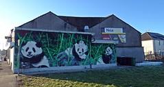 Photo of Paisley Pandas