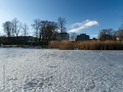Photo of 2021 01 22 - frozen pond