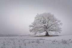 Photo of Winter Alone