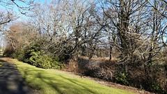 Photo of Hodgkin Park