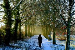 Photo of winter path