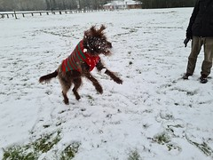 Photo of Whispa enjoying the snow in Willen, Milton Keynes 24Jan21