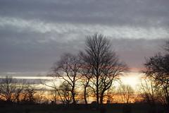 Photo of 25.1.21 Fallowfield Withington Walk 55-300 16