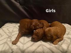Lola girls pic 2