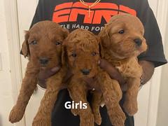 Lola girls 1-24-21