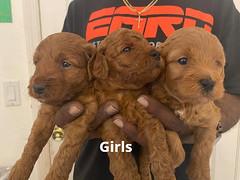 Lola girls 1-24-21 pic 2