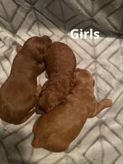Lola girls pic 3