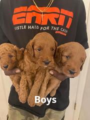Lola boys group 2 1-24-21