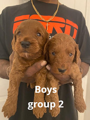 Lola boys 1-24-21 pic 2