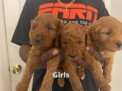 Lola girls 1-24-21 pic 3