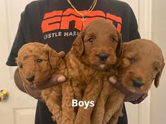 Lola boys group 2 1-24-21 pic 3
