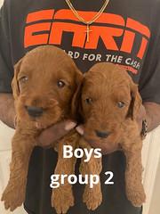 Lola boys 1-24-21